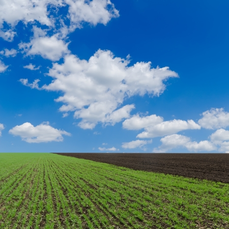 non cultivated: field with green shots and cloudy sky Stock Photo
