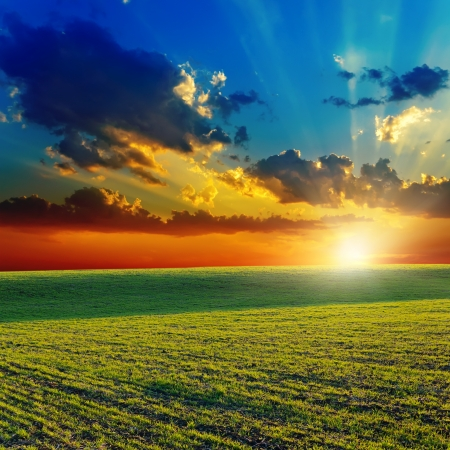 sunset over agricultural green field photo