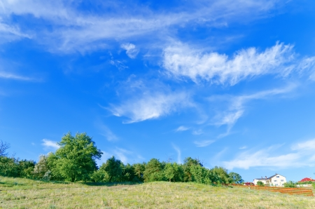 summer landscape of green forest with bright blue sky photo