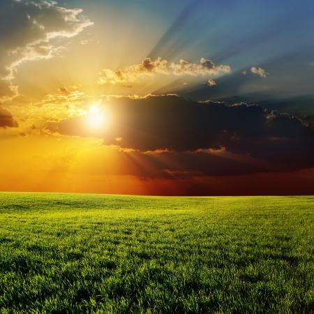 wschód słońca: Dramatyczny słońca nad zielonym polu rolnych Zdjęcie Seryjne