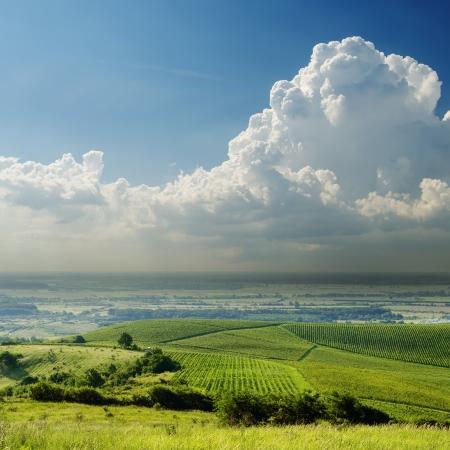 carpathian mountains: green landscape in fog under cloudy sky