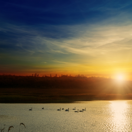 sunset over river with swans photo