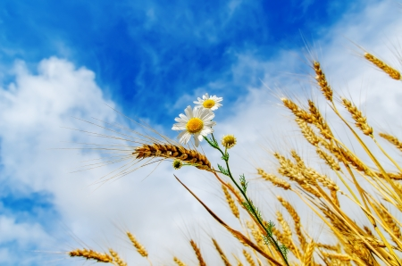 harvest with flower under cloudy sky photo