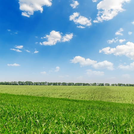 agriculture wallpaper: beautiful green landscape and clouds in sky