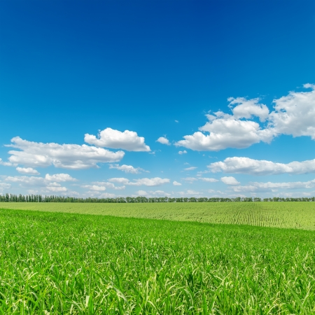 horizon over land: green fields and cloudy sky Stock Photo