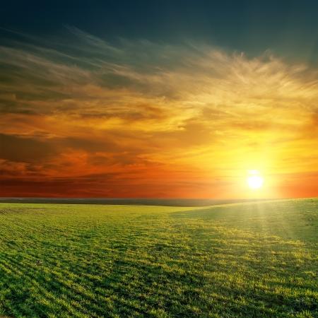 goede zonsondergang over groene veld Stockfoto