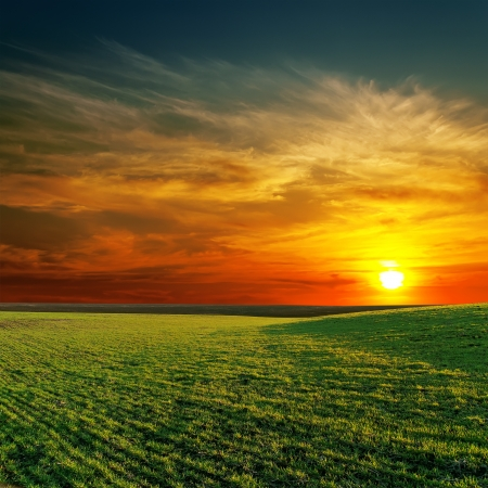 colorful sunrise: good sunset and green grass