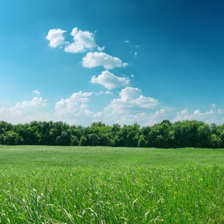 green grass with tree and cloudy sky photo