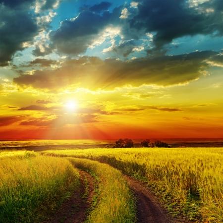 sunset over landelijke weg in de buurt groene veld Stockfoto