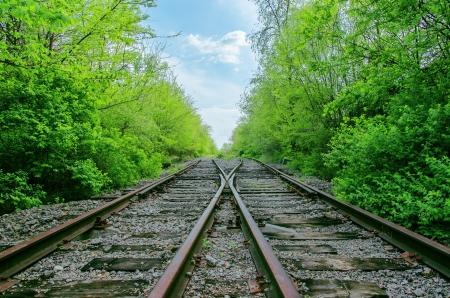 wood railroads: crossing of two railroads in green wood