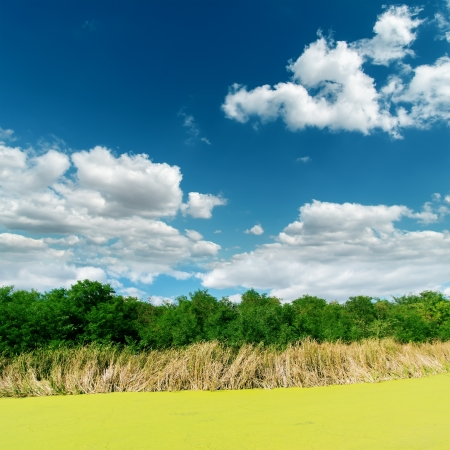 green swamp on sunny day under clouds Stock Photo - 18454339