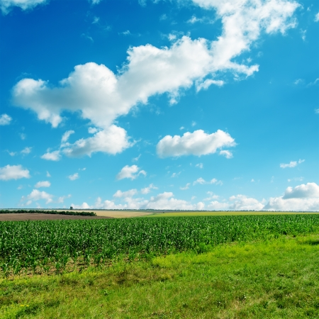 green grass under cloudy blue sky Stock Photo - 18882710