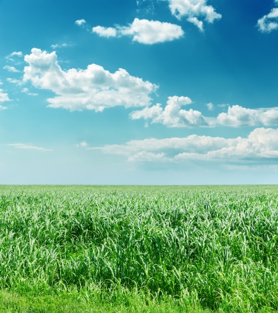 green grass and blue cloudy sky photo