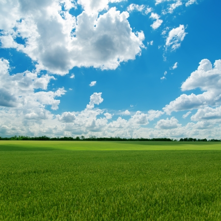 agricultural green field and cloudy sky photo