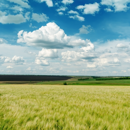 green agricultural field and clouds in blue sky photo