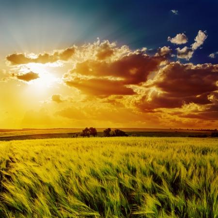 dramatic sunrise: orange sunset over green field