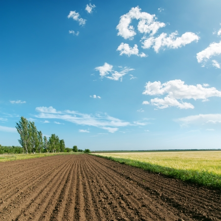 ploughed field: landscape with plowed field under light clouds