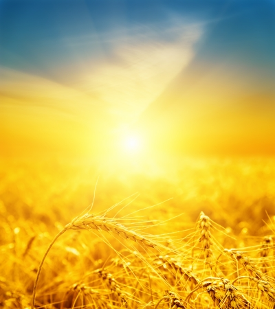 ゴールデンハー ベストの良い夕日は。ソフト フォーカス