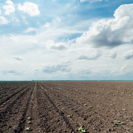plowed field with little green shots and dramatic sky photo