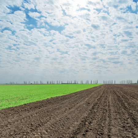 ploughed field: plowed and green fields under cloudy sky