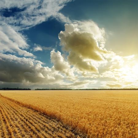 good sunset over harvesting field