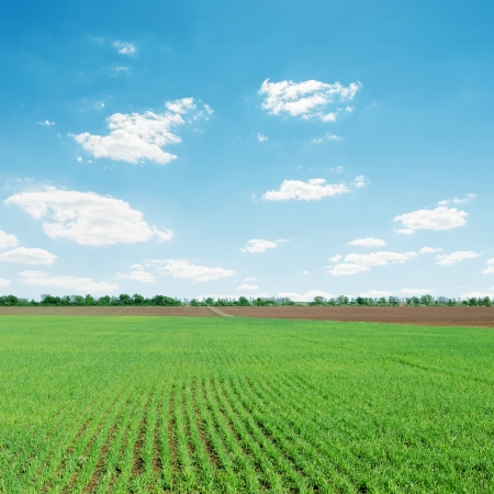 cloud background: light clouds over green agriculture field