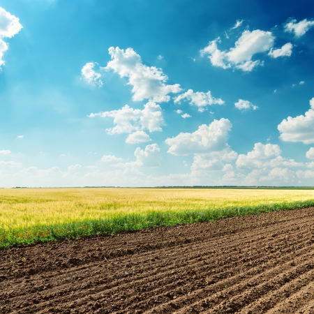 ploughed field: agriculture fields under deep blue cloudy sky