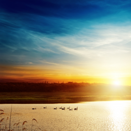 sunset over lake with swans photo