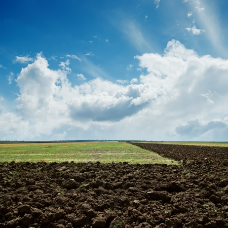 ploughed field: green and plowed fields under cloudy sky