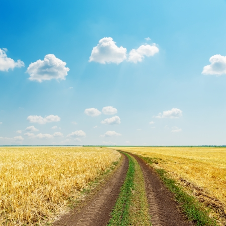 rural road in field with golden harvest and blue sky photo