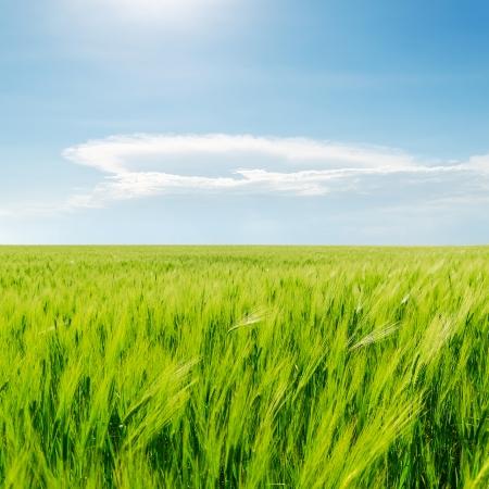 緑の草原、青い曇り空 写真素材