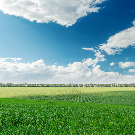 agriculture green field and clouds over it photo