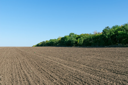 plowed field with trees and deep blue sky 스톡 콘텐츠