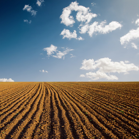 plowed field and blue sky in sunset