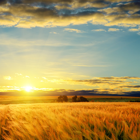 horizon over land: clouds on sunset over field with barley Stock Photo