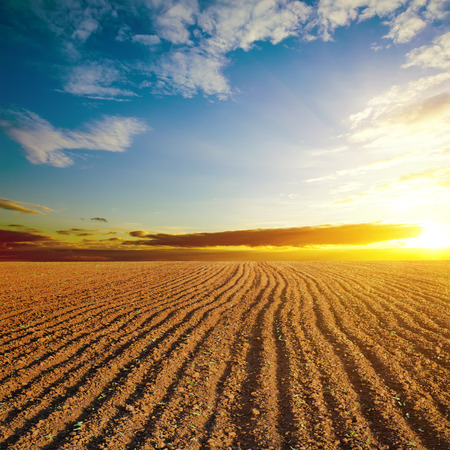 cloudy sunset and plowed field 스톡 콘텐츠