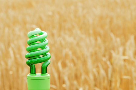 green eco bulb over field with golden harvest photo