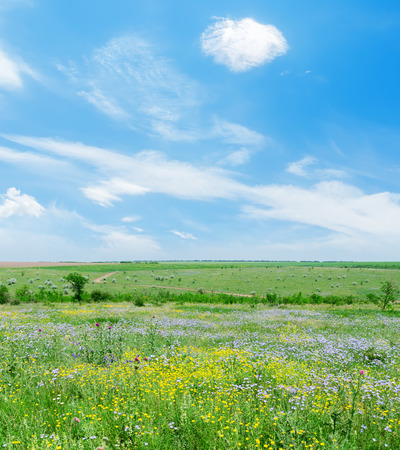 field of flowers: sunny day on green landscape with flowers and blue sky with clouds Stock Photo