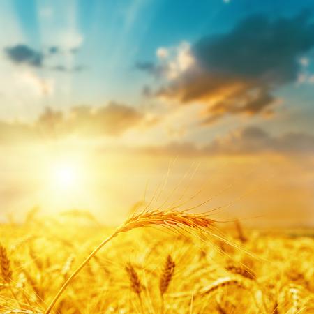 autumn sky: harvest field and sunset. soft focus on bottom