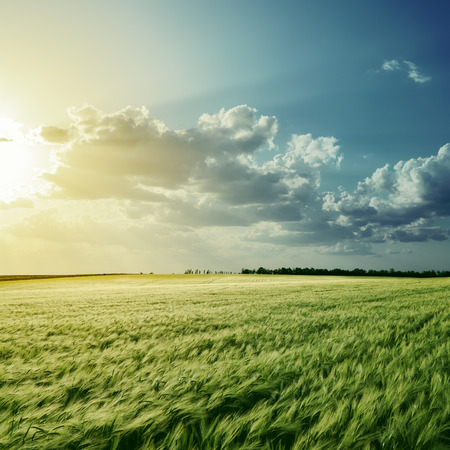 view to green field with harvest under cloudy sunset photo