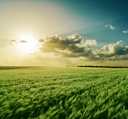 farm field: dramatic sunset over green field Stock Photo