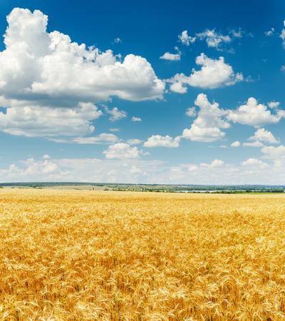 himmel mit wolken: Landwirtschaft Feld mit goldenen Ernte und Wolken im blauen Himmel Lizenzfreie Bilder
