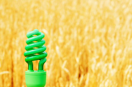 save the planet: green eco bulb over golden field