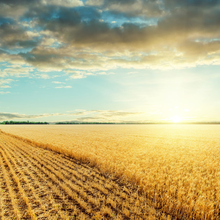 naranja color: low sun under clouds and harvesting golden field