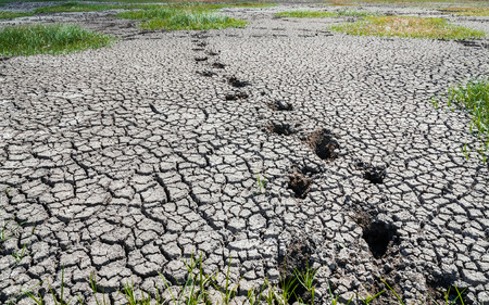 dire: last footprints on drought land Stock Photo