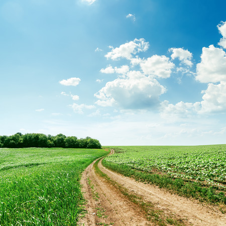 farm field: rural road in green spring fields and light clouds over it Stock Photo