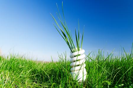 espiral: bombilla espiral de bajo consumo en la hierba verde