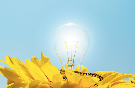 usual: usual lamp in sunflower Stock Photo
