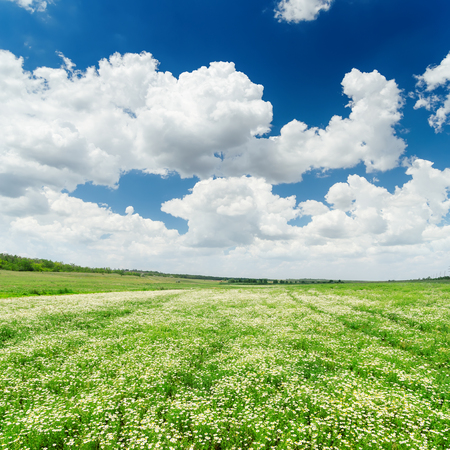 a meadow: dramatic sky and green meadow with chamomiles