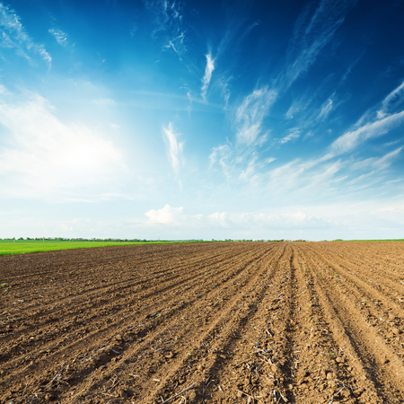 field sunset: sunset in deep blue sky and black plowed field